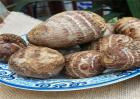 芋头的种植方法