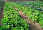 有机蔬菜的种植技术