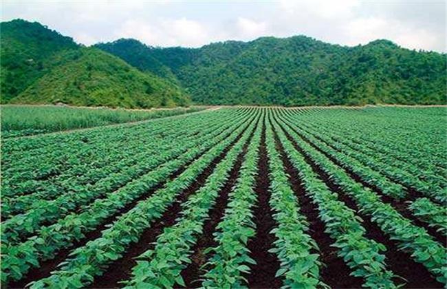 大豆高产施肥技术