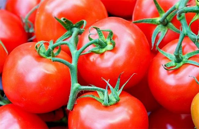 西红柿 方法 坐不住果