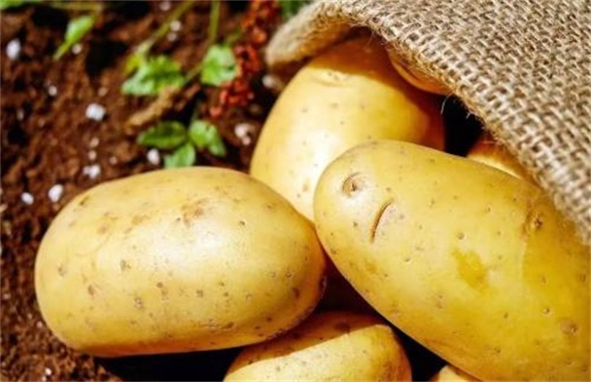 土豆怎样才能高产