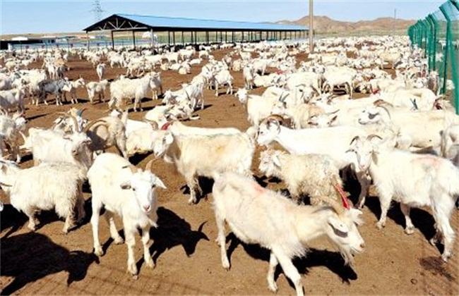 肉羊的育肥方法