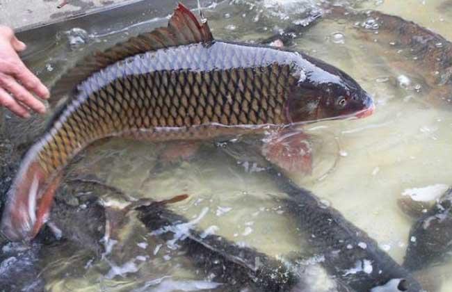 农村养鱼的几大误区