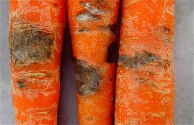 胡萝卜常见的病虫害及防治方法
