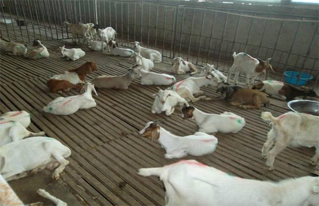 肉羊的常见疾病防治方法