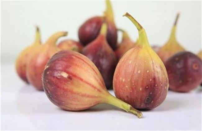果树栽培:无花果的虫害有哪些?怎样防治?