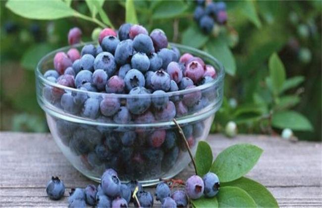 蓝莓 防治 常见病害