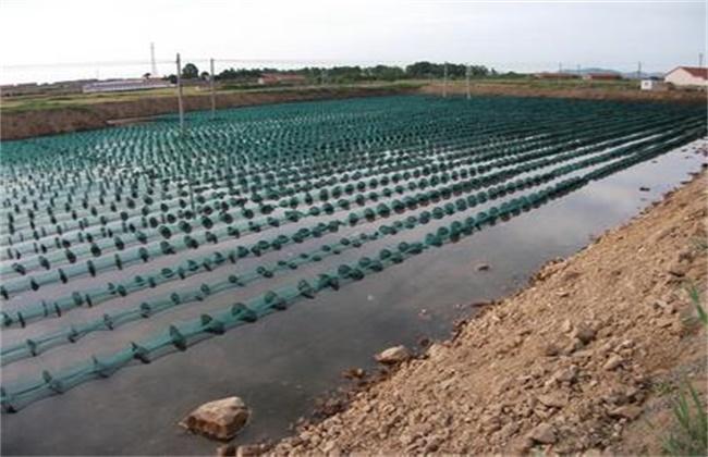 海参虾池养殖模式