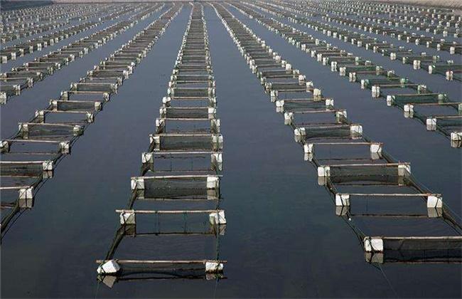 海参海上筏式养殖模式