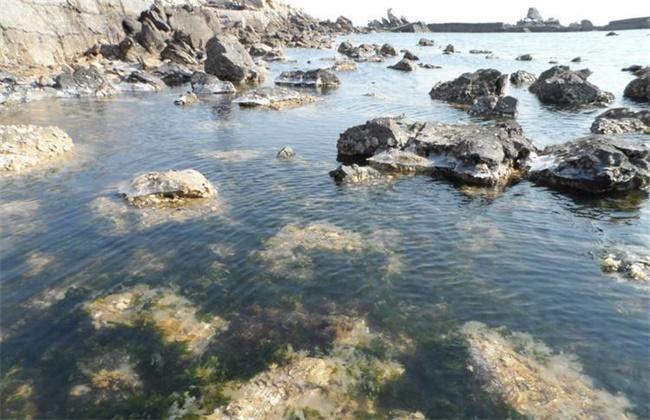 海参潮间带垒石养殖模式