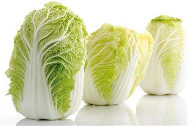 白菜 管理技术 高产