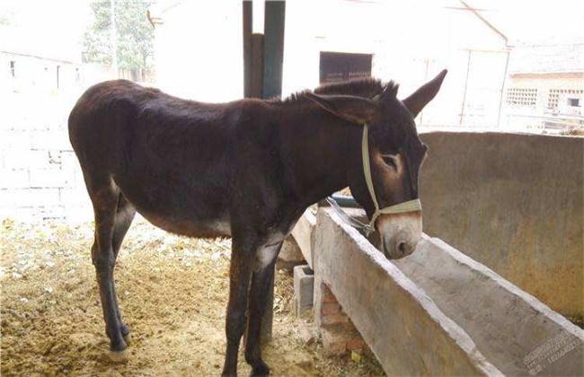 肉驴常见疾病防治方法