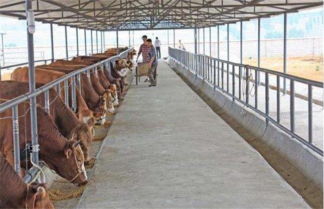 牛 养牛场 预防 病害