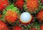 红毛丹的种植方法