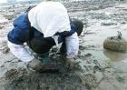 蛤蜊养殖技术