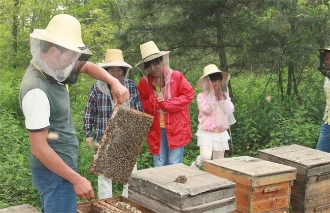 夏季养蜂注意事项