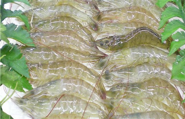南美白对虾养殖如何预防疾病