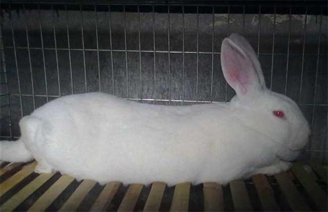 獭兔养殖赚钱吗