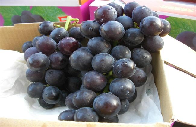 如何提高巨峰葡萄的品质