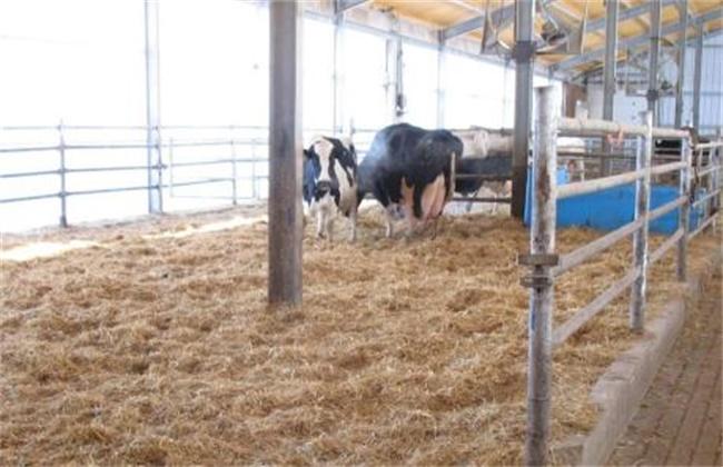 奶牛乳房炎发病原因及防治方法