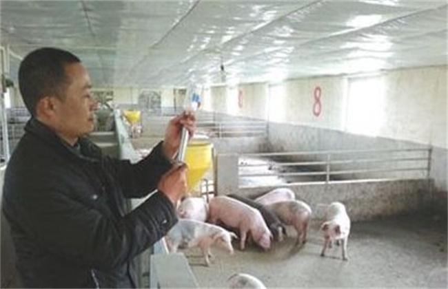 仔猪去势的注意事项