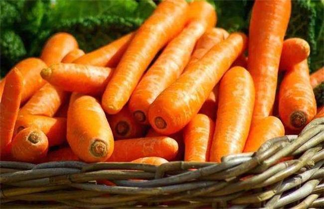 田间管理 胡萝卜 方法