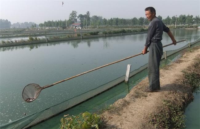 夏季高温季节泥鳅养殖管理要点