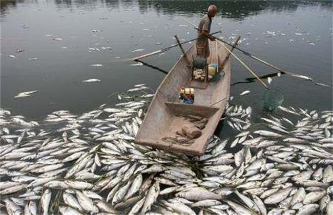 鱼类出现浮头和泛塘的原因及防治方法