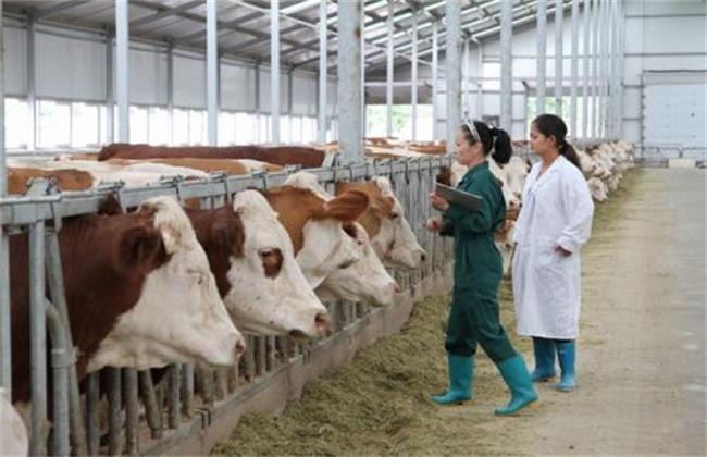 肉牛育肥的注意事项
