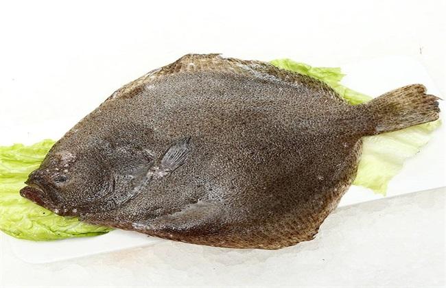 多宝鱼 养殖 方法