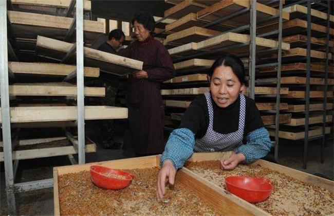 黄粉虫冬季养殖管理方法