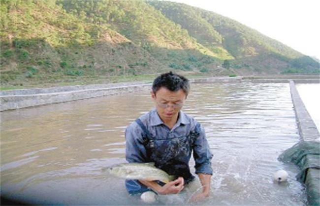 加州鲈鱼常见的养殖模式