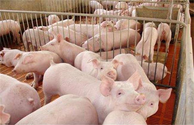 仔猪的饲养管理方法