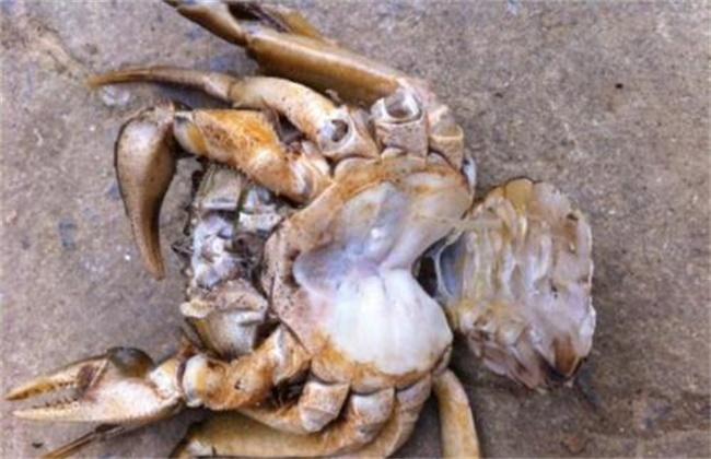 秋季河蟹死亡的原因及预防措施