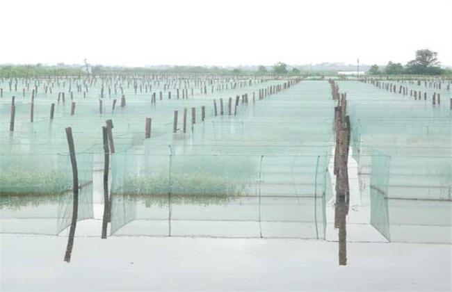 黄鳝常见的养殖模式