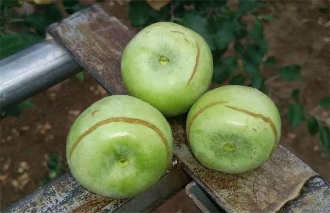 苹果水裂纹发生原因及防治
