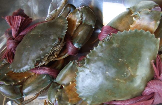 青蟹养殖的日常管理