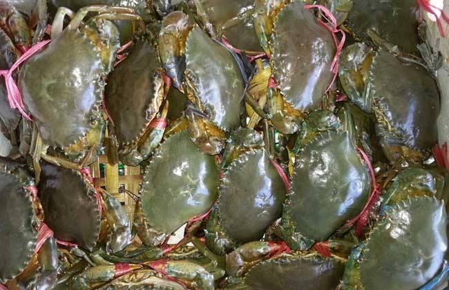 青蟹 养殖 日常管理