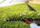 如何提高辣椒种子的出芽率