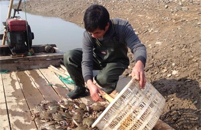 梭子蟹 高效 混养方法