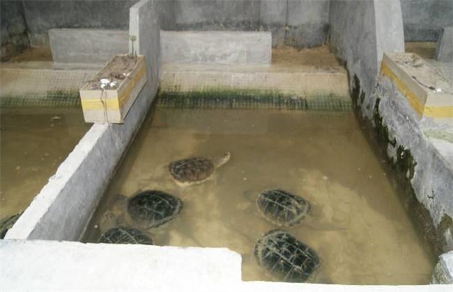 鳄龟养殖技术