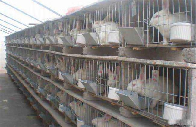 养殖肉兔该注意什么