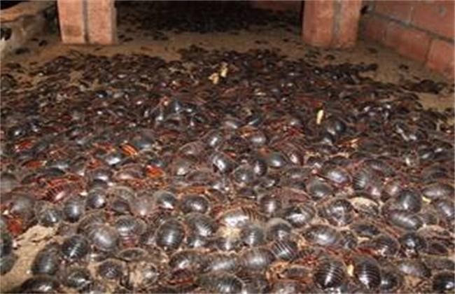 土元的养殖技术