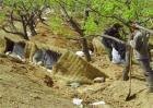 板栗的高产施肥技术