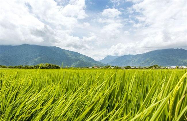 水稻 注意事项 幼穗分化期