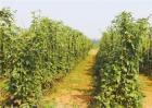 豆角常见病虫害及防治