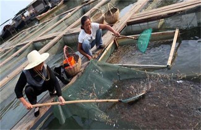 青虾的养殖技术