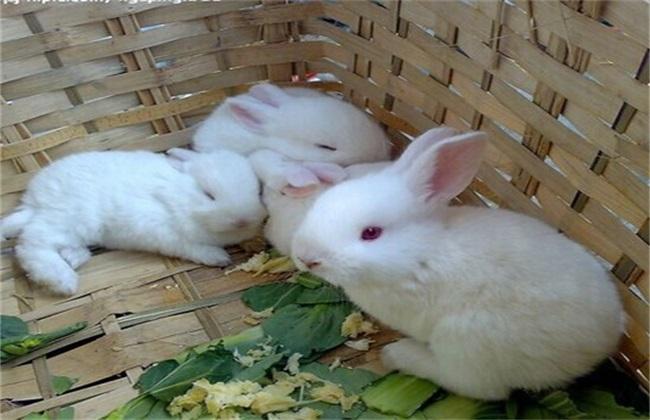 养殖兔子的饲养管理