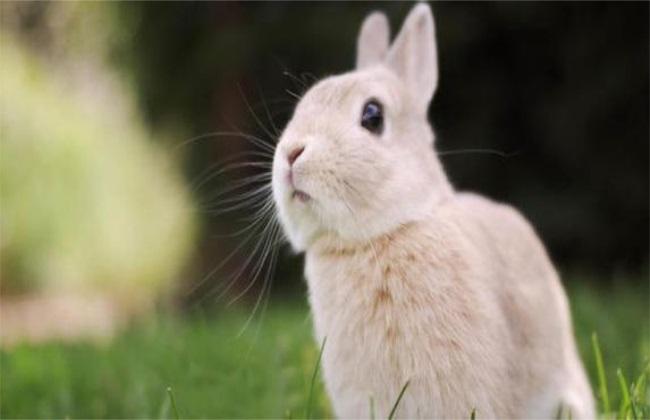 饲养管理 兔子 方法