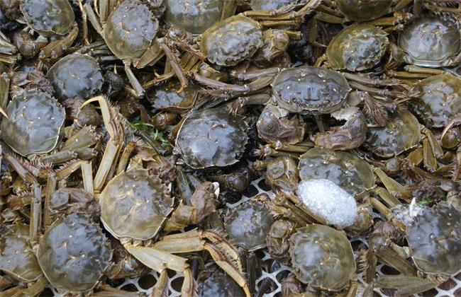 河蟹 管理要点 养殖